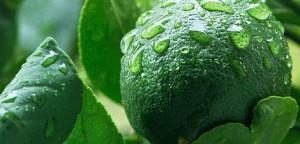 Jeruk nipis bantu proses penurunan berat badan